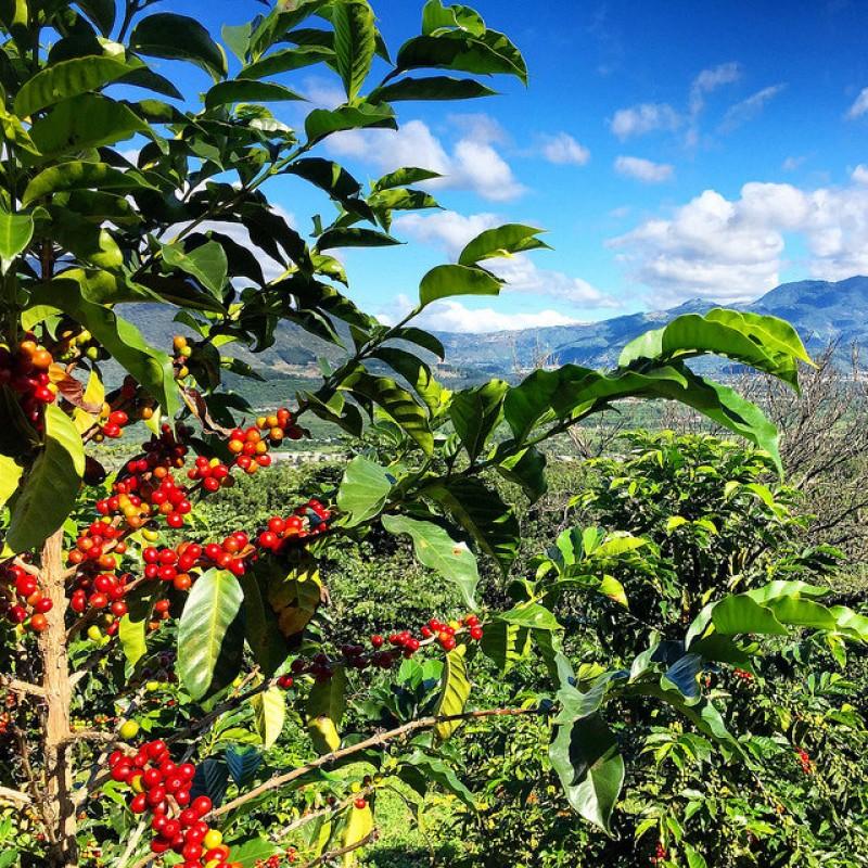 #10 Guatemala SHB Coffee 200g