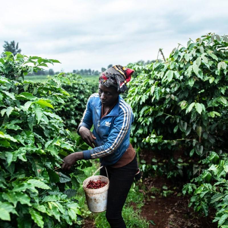 #16 Kenya AA Coffee 200g