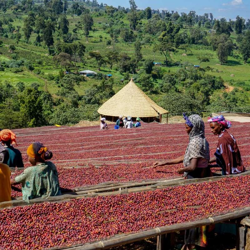 #5 Ethiopia Yirgacheffe G2 Coffee 200g
